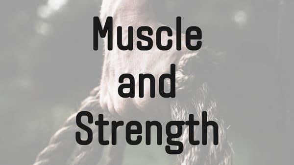 筋肥大と筋力向上の関係